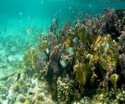 Fotos de Corales de san Bernardo e islas del rosario_10