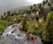 Fotos de Parque Nacional Natural El Cocuy_3